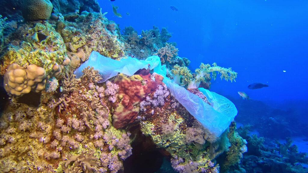 サンゴ礁「coral leaf」