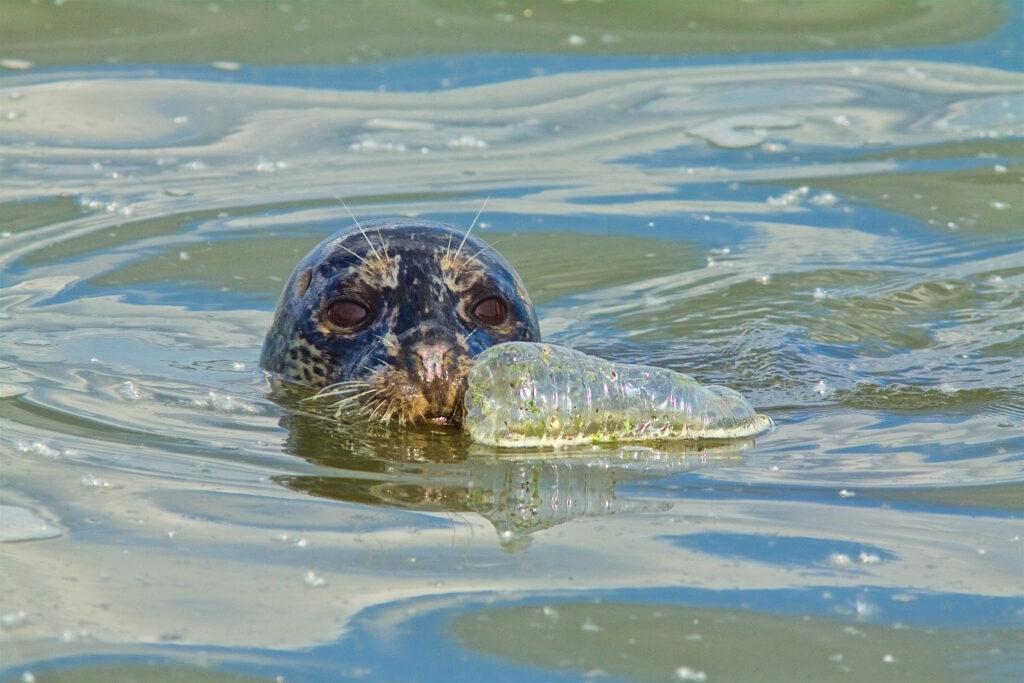 海洋プラスチックごみが環境に及ぼす影響