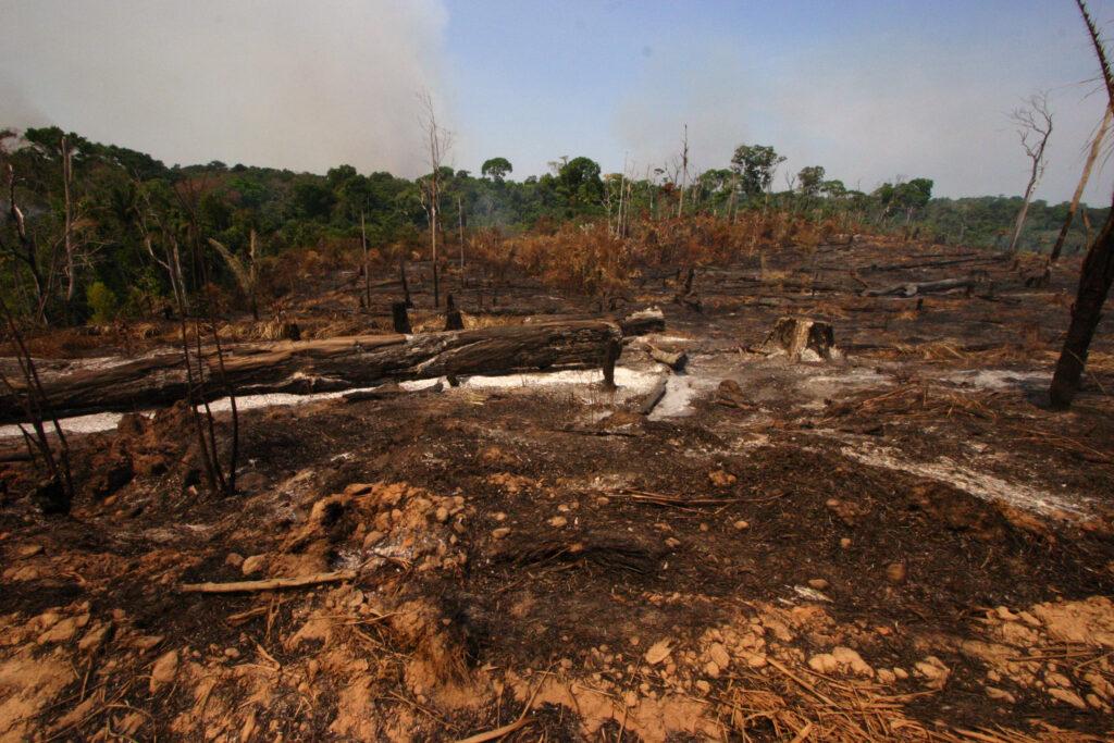森林破壊「deforestation」