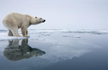 地球温暖化の現状を知り、私たち1人ひとりができることを考える