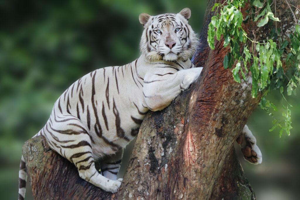 野生動物の絶滅危機