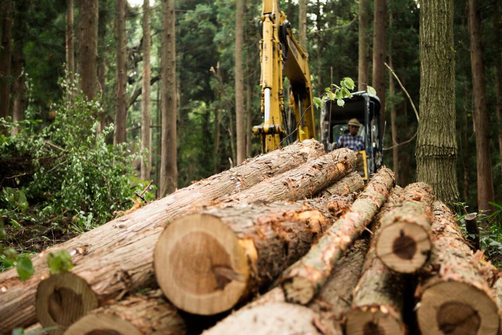 気候変動による林業への影響