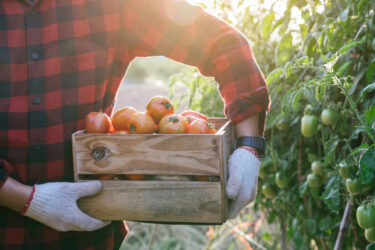 農家が食品ロス解消のためにできること。現状や対策も紹介
